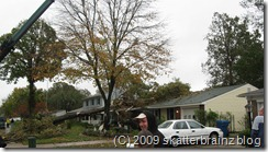 House damaged by fallen tree