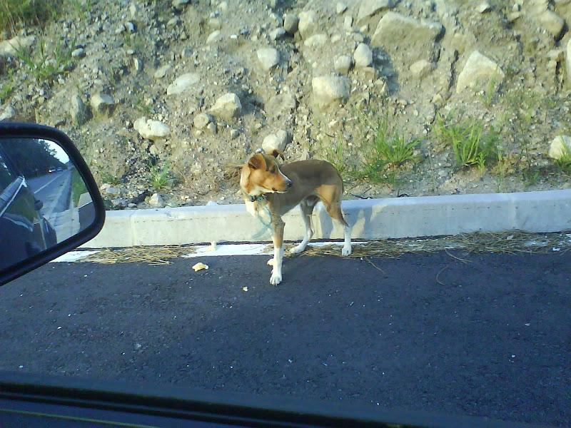 Perro abandonado en la carretera. Galicia. Movil%20103