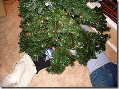 20081207_tree_c