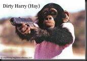 dirty_harry_hay