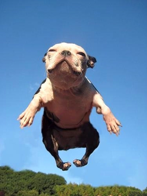 funny-flight-of-the-dog