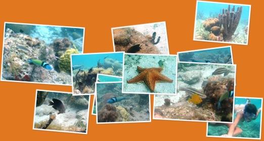 Ver Caribe bajo el agua
