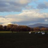 Πάπιες με φόντο τα Χιονισμενα βουνά της Σκωτίας