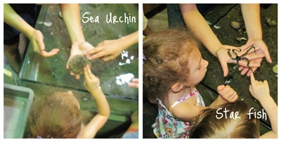 More Touch Tank