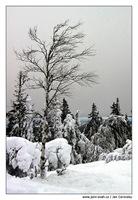 mraz_strom