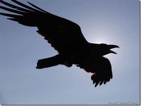 raven alaska shee fishing
