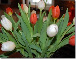 tulips RS2