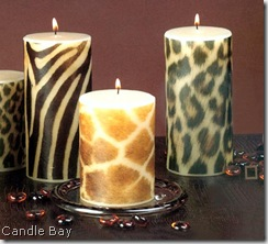 zebra candle bay