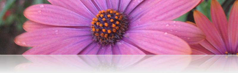 daisy banner 3