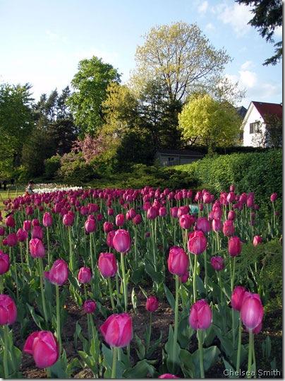 tulips chelsea smith 4