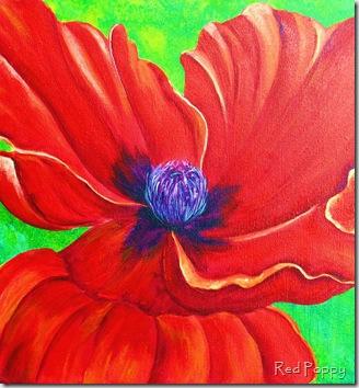 Red Poppy 071