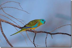 parrot flickr 3