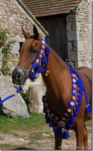 tassels horse arabian horses legacy