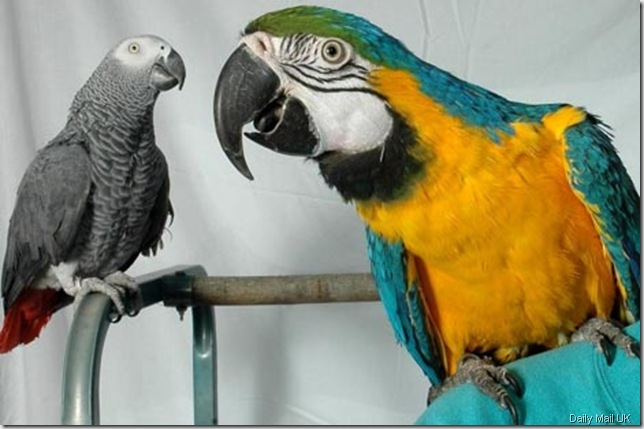 parrot daily mail