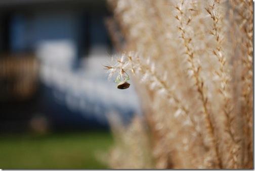 grasses bug 3