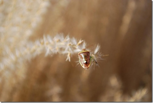 grasses bug 2