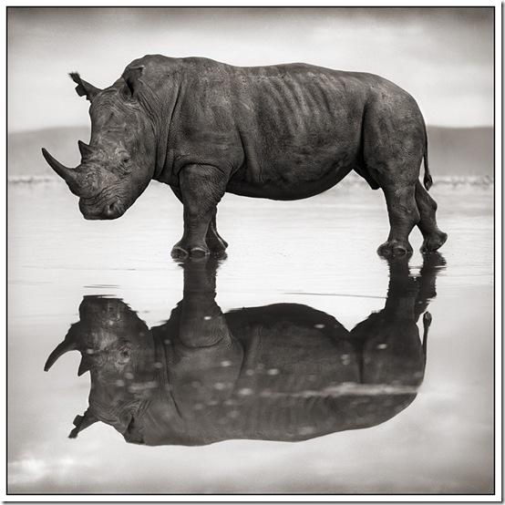 RhinoonLake