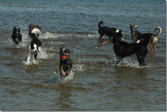 carol dogs 3