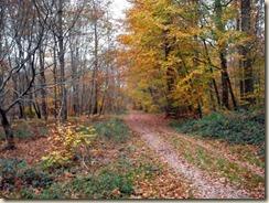 automne près de Bourron-Marlotte (2)
