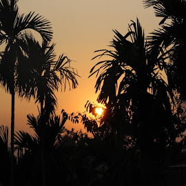 The Sunset  by Prateek Bhattacharya - Novices Only Macro