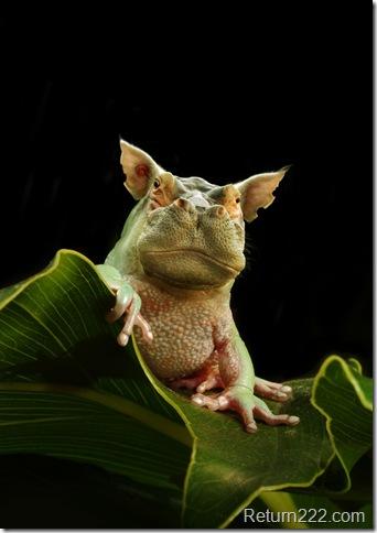 Hippofrog_2_by_oilcorner