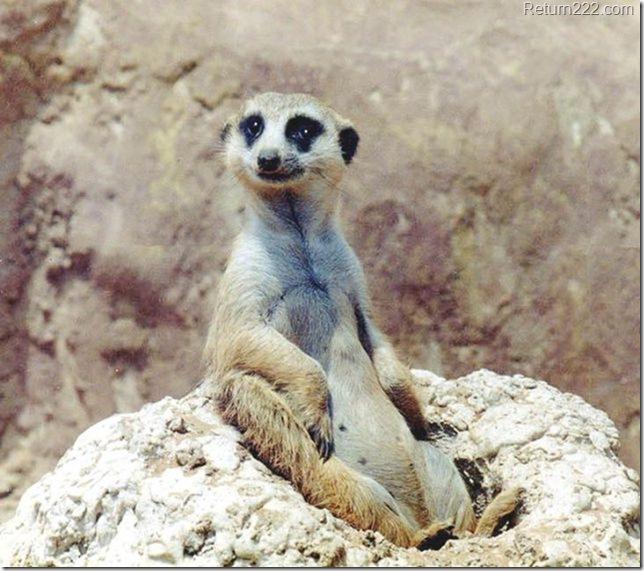 animales_bonitos (108)