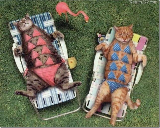 CatsSunbathing