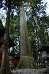 Tall trees tower all over Nikko
