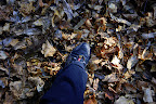 Much of the hike was spent crunchily walking on a carpet of dry, fallen leaves.  Fun!