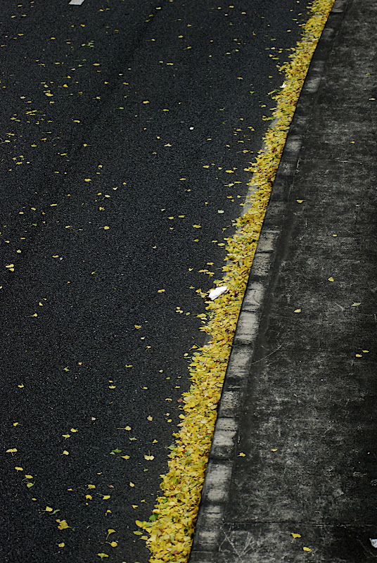 A line of ginko leaves in the gutter