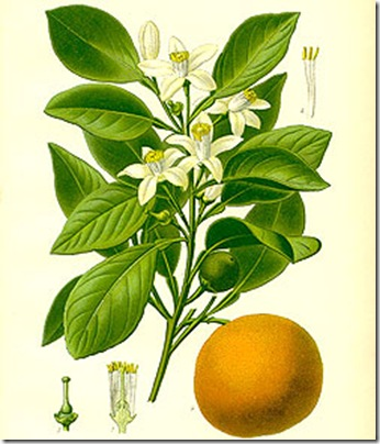 Neroli_0
