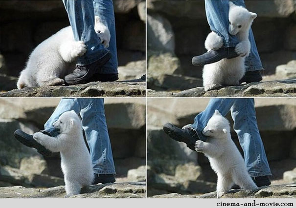 Polar Bear Attack Caught on Camera [Pic]