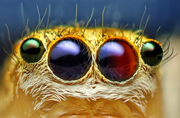 20 Incredible Eye Macros