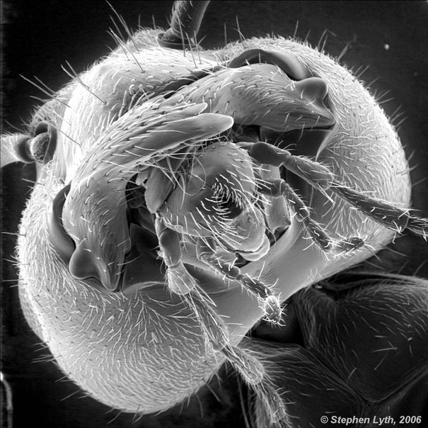 ant under a microscope - photo #29