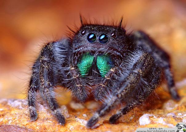 世界上最可爱生物