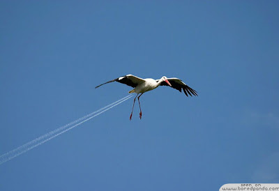 Stork Plane forced perspective