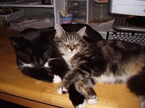 Missy & Simon:  Nap Buddies