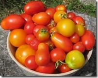 harvest 100904