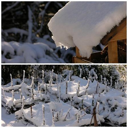 grönsaksland i snö