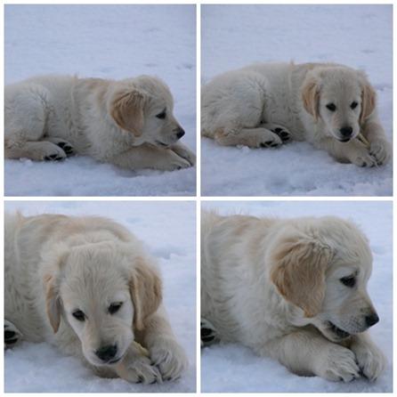 leia i snö