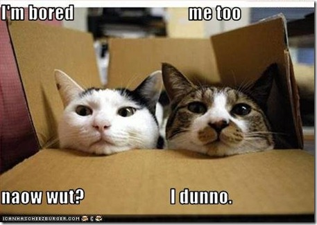 funny-pictures-box-cats-are-bored