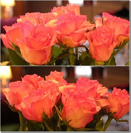 1  rosor