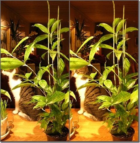 16  min krukväxt