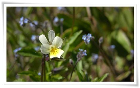 15 flora