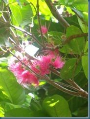 mogea blooms