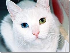 Animais olhos cores lindos (1)