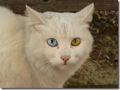 Animais olhos cores lindos (6)