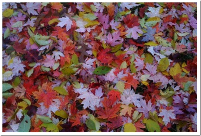 more leaves 005