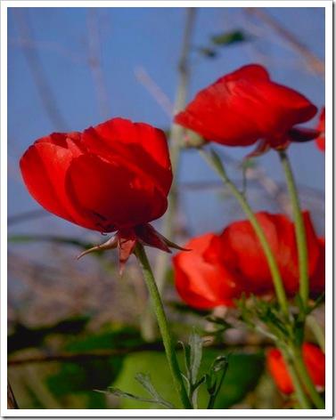 Flores do Campo (2042)