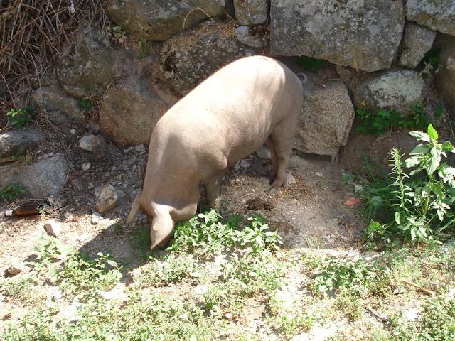 Cerdo de San Antón, la Alberca